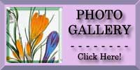 Crocus and Snowdrop Photo Gallery